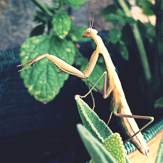 Animals Eye Em Nature Lover Insects  Mantis