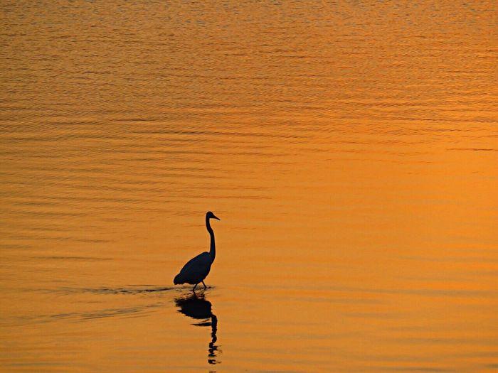 Birds Bird Photography Bird Birdwatching Birds_collection EyeEm Birds Heron Sea Enjoying The Sun Sunset