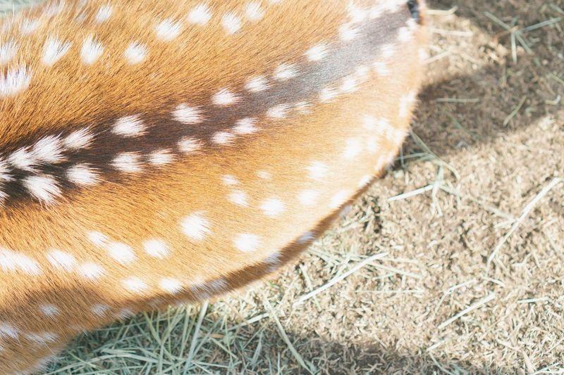 Deer Zoology