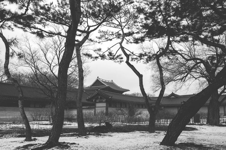 Architecture Bare Tree Beauty In Nature Black Black And White Branch Buddhism Building Exterior Built Structure Day Korea Nature No People Outdoors Sky Tranquility Tree Tree Trunk
