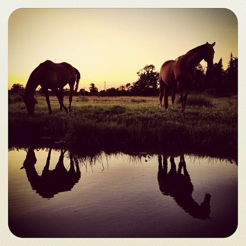 One Horse is never enough ??? #earlybirdlove #ebstyles_gf #gf_ire #sunset #swords #reflection #jj_forum #jj #ireland Gf_ire Reflection Sunset_united_reflec_001 Sunset Ireland Swords Jj  Earlybirdlove Jj_forum Sunset_united Fotografiaunited Landscapestyles_gf Ebstyles_gf