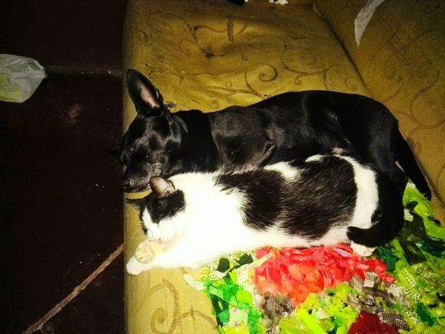 Night Night, Sleep Tight Taking Photos Check This Out EyeEm Gallery EyeEmBestPics Cat♡ Dog❤ Sleeping Sleeping Cat Sleepy Kitty