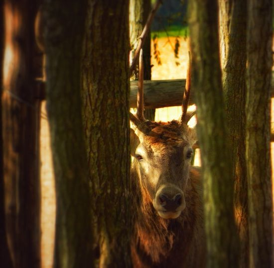 Animal Themes No People Outdoors Nature Animals In The Wild Deer Deer