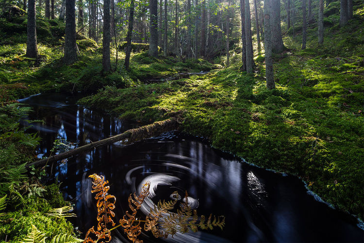 Forest stream Beauty In Nature Environment Flowing Water Forest Green Color Nature Non-urban Scene Outdoors Scenics Stream Tranquil Scene Tranquility Tree Water WoodLand Reflections In The Water