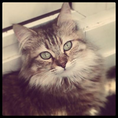 Mausi Cat Love Cute eyes