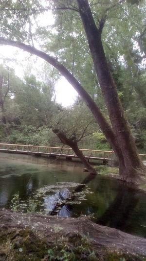 Tree Water Branch Lake Reflection Sky Landscape Grass Willow Tree Fallen Tree Woods