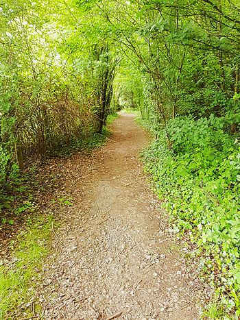 My travels through my local woodland, I enjoy letting it envelop me :) Ashford Kent Woods Forestwalk Forest Photography Local Woodlands No People Android Photography