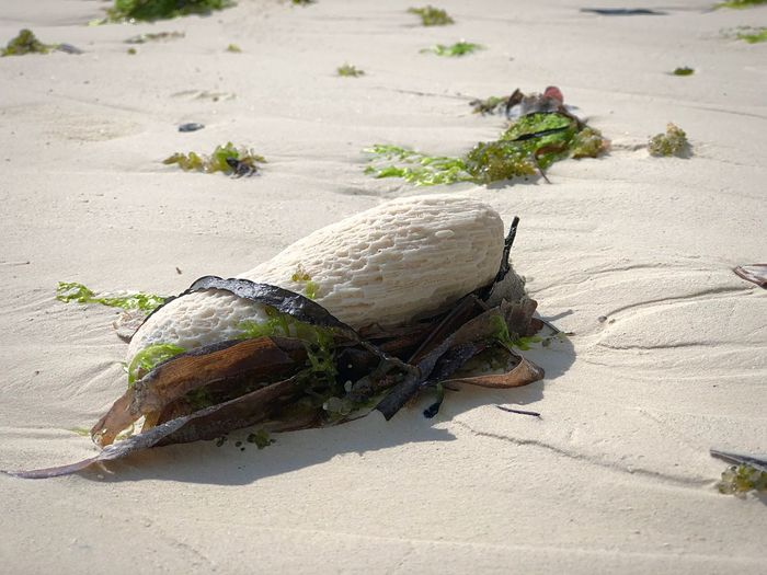 Solitaire White Restos Mar Piedra Land Mar