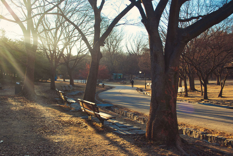 vintage photography style, sun rays through branches of trees,wooden bench in the park during winter time Tree Plant Transportation Nature Road Bare Tree City Mode Of Transportation Street Car Tree Trunk Sunlight Trunk Motor Vehicle Architecture Park Day No People Land Vehicle Sky Outdoors