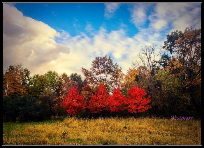 The middle four Tree And Sky Fieldscape Autumn Tree Nature Change Beauty In Nature Sky Colour Your Horizn Tranquility Red No People