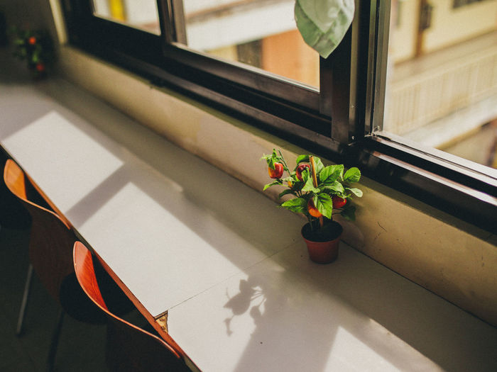 High angle view of potted plant on table by window