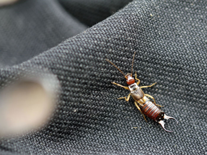 High angle view of insect