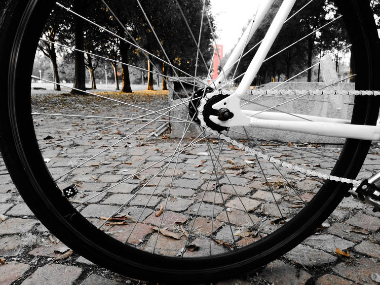 CyclingUnites Outdoors Day Tree Tire Low Section Green Trasportation TransportationExplorethecity Bycicle Inspired Ecology Streetphotography EyeEm Pointofview Outdoors Day Tree No People Close-up Horizontal Tire Low Section Spoke Sky