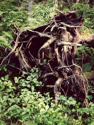Nature Tree Roots