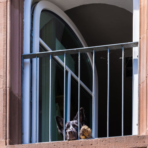Close-Up Of Dog In Window