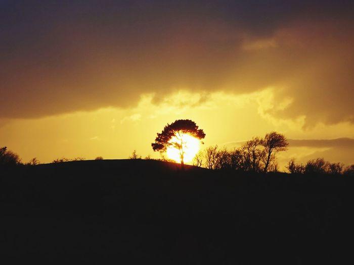 Home Love Sillouette Beautiful Light Orange Sunset Hills Tree Sunset Silhouette Sky Landscape Cloud - Sky Single Tree Dramatic Sky Atmospheric Mood The Great Outdoors - 2018 EyeEm Awards