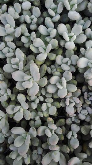 Terrarium🍀 Plants 🌱 Lembang INDONESIA Nature Beauty In Nature Growth Freshness Tranquility Abundance Earthday Fragility Full Frame