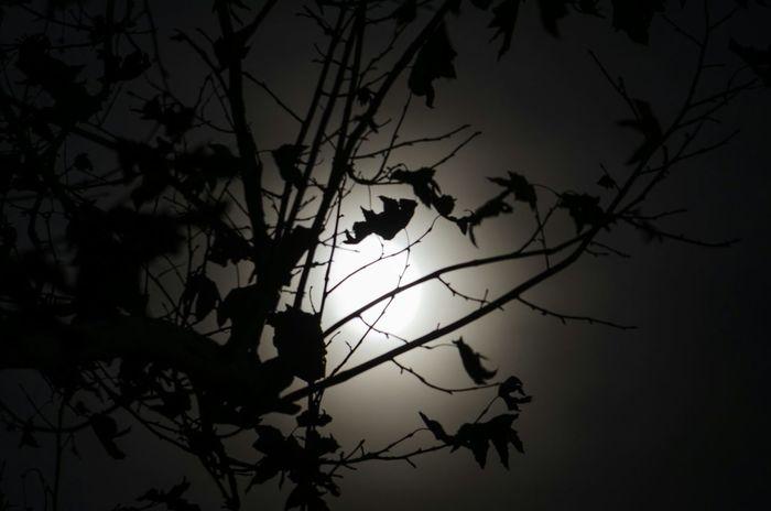 """Moonglow"" 🌚 Moon Moonlight Silhouette Trees TreePorn Skyporn Sky Nature Luna Clouds"