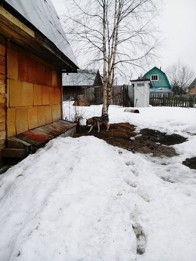 Houses by snow during winter