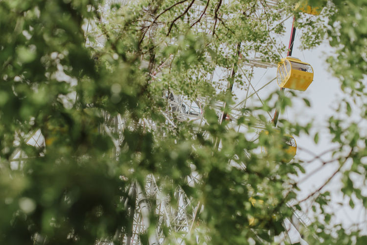 Low angle view of ferris wheel seen through trees