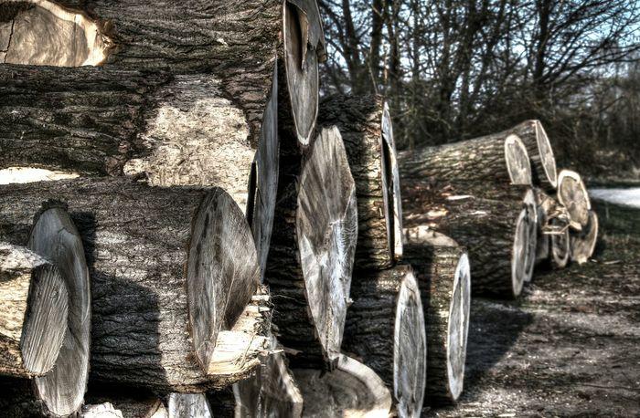 Waldspaziergang Morning Wood Ingolstadt Outdoors Take Photos Sunny Day