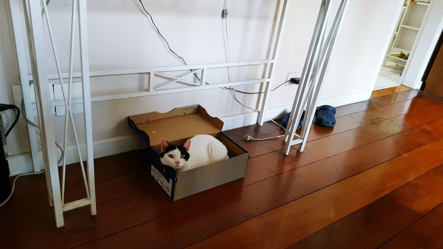Cat in the Shoe box Taking Photos Hello World Relaxing Enjoying Life Sao Paulo - Brazil Cats EyeEm Animal Lover Taking Photos Sleeping Capture The Moment Sleeping Cat My Cats Cats Sleeping Style Cat Lovers Cats Of EyeEm Cats 🐱 Cat♡ Cats Lovers  Cats Sleeping Cat