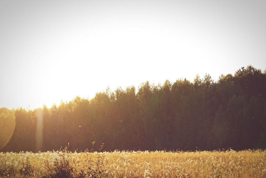Morning Summer Russia Forest Field Landscape Summertime Hello World Gold Golden Hour Grass