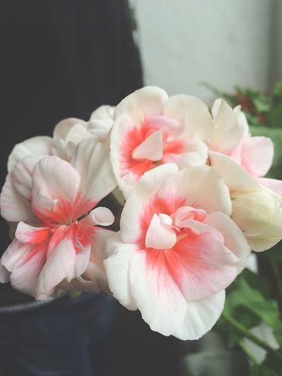 Flower OpenEdit Vilkovo