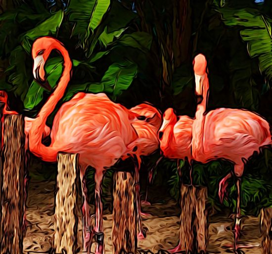 tge beauty and grace of pink flamingos. Beautiful Flamingos Birds Colorful Flamingogardens Flamingos Nature Painterly Flamingoes Pink Flamingos