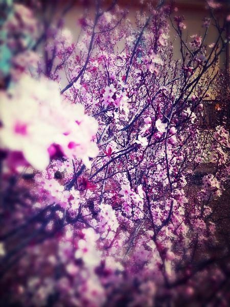 Spring Spring Flowers Samsung Galaxy Note II Movilgrafias