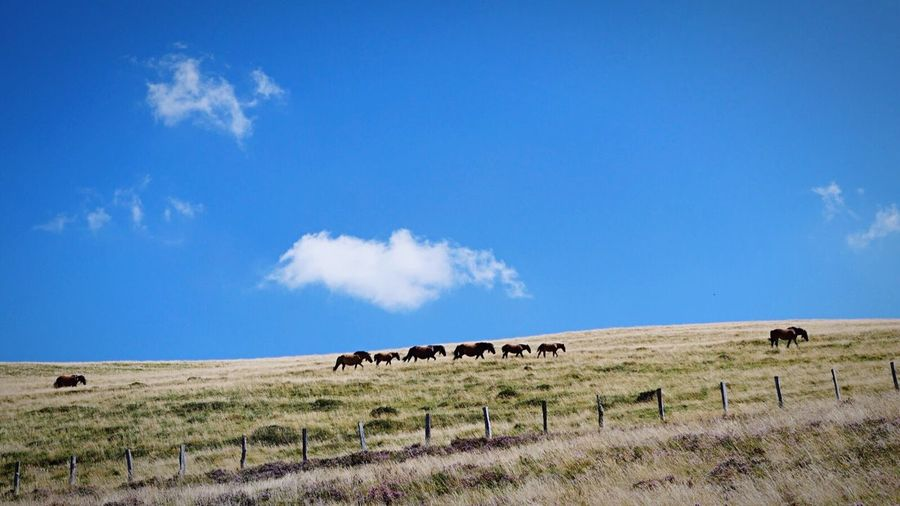 Horses grazing on countryside landscape