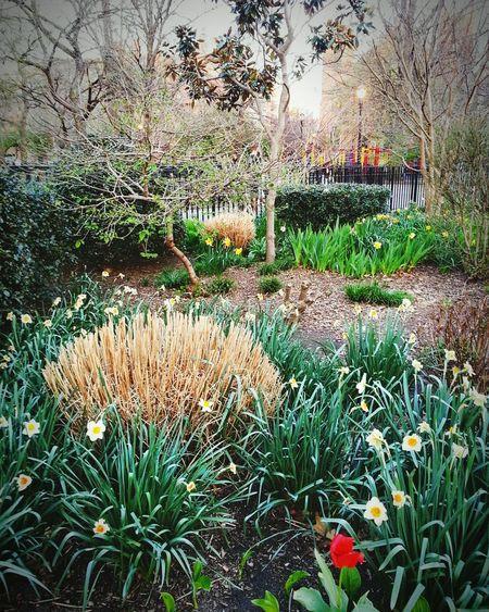 Spring Into Spring Thompkins Square Park
