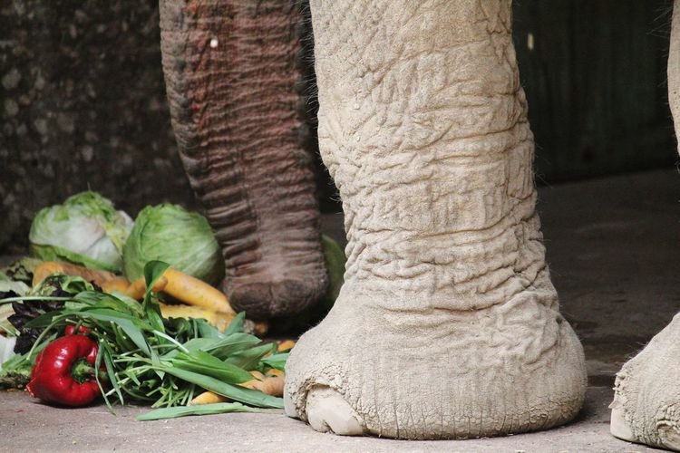 Paprica Elefant Elefantenfuss Big Foot Low Section Vegetable Agriculture Close-up Food And Drink