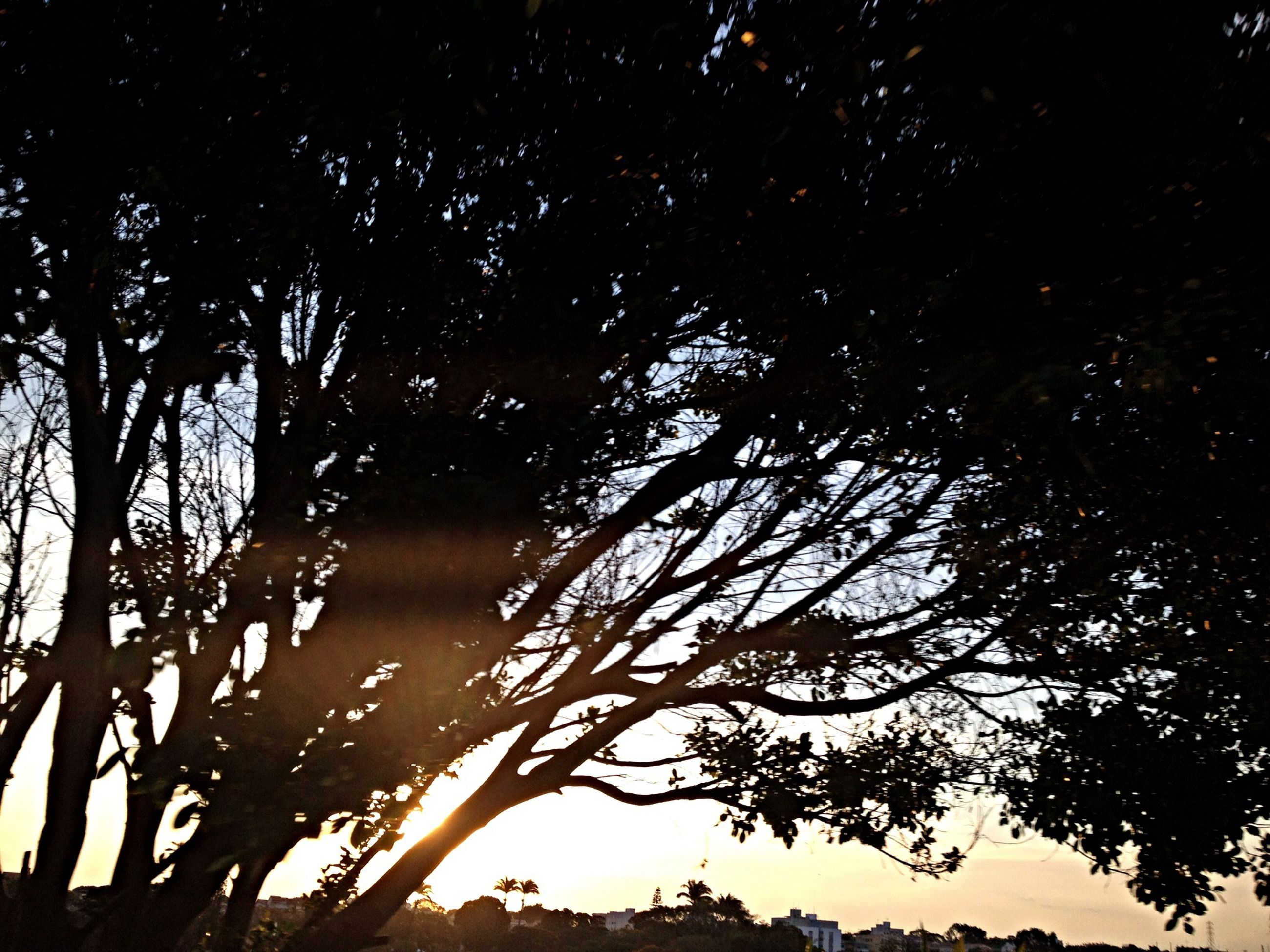 tree, silhouette, low angle view, branch, night, tranquility, growth, nature, beauty in nature, tranquil scene, scenics, sky, outdoors, tree trunk, idyllic, forest, no people, bare tree, clear sky, illuminated