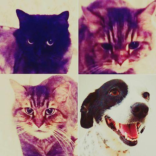 4ekimhayvanlarıkorumagünü Betty&fırfır&ogliş&kiwi CanDostlar Animal Love October 4, World Animal Protection Day