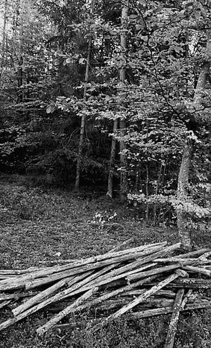 Black & White Plants Trees Tree Forest In The Forest