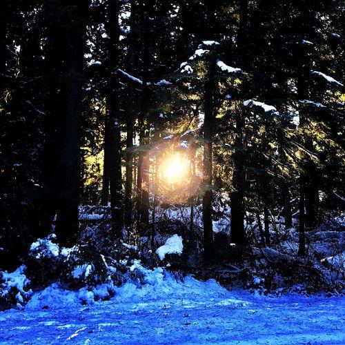 EyeEmNewHere Cold Winterwonderland Sunset Snow ❄