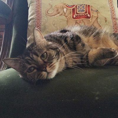 Cats Instacats Munchie