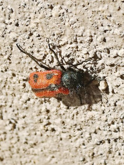 Mr Bug Friend Taking Photos Beautiful Nature
