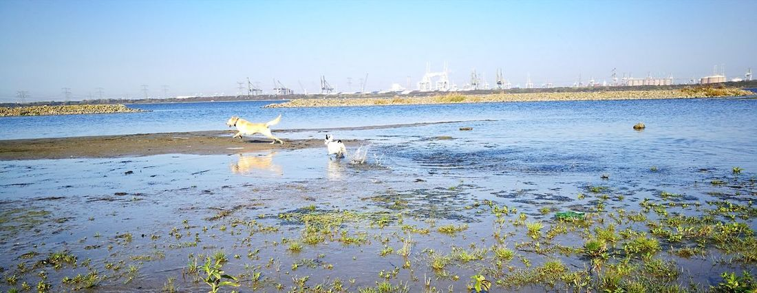 Water Blue Sky Outdoors Beach Nature Scenics Horizon Over Water Dogs Playing  Dogs Playing Together Landscape Industry Industrial Landscapes Industrial
