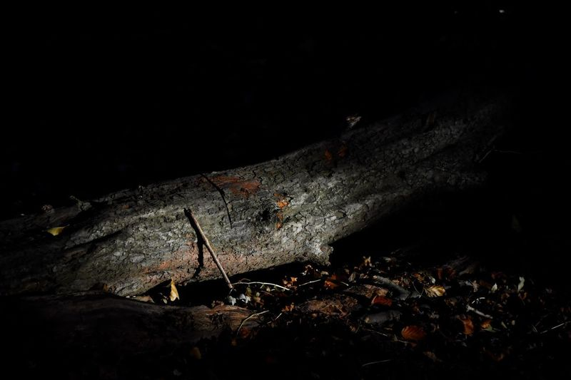 Night Nature No People Damaged Copy Space Architecture Abandoned Outdoors Land Old Dark Wood - Material Field Ruined Illuminated