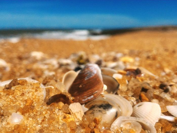 Beach Sea Sand Seashell Sea Life Hermit Crab Close-up First Eyeem Photo