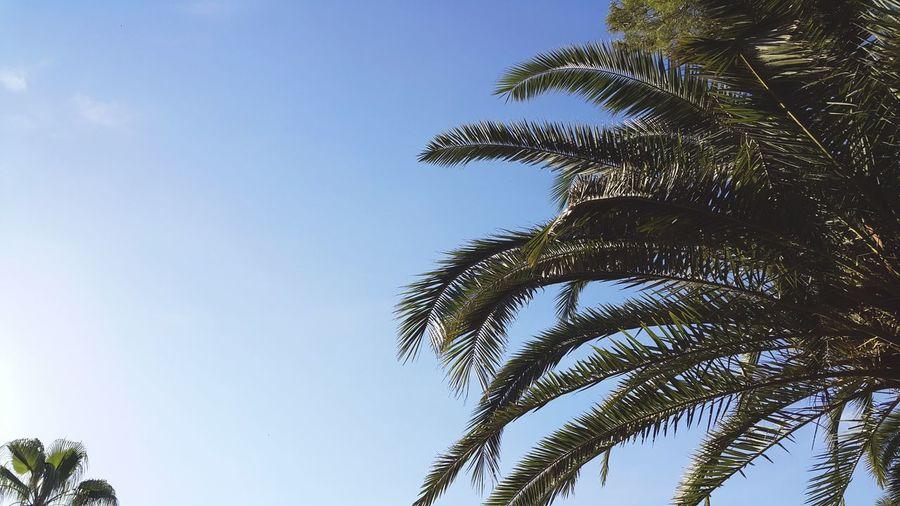 Palm Palm Trees