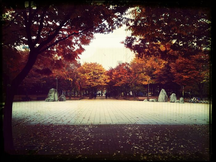 kangchon park My Hometown Autumn Colors Mapleleaf