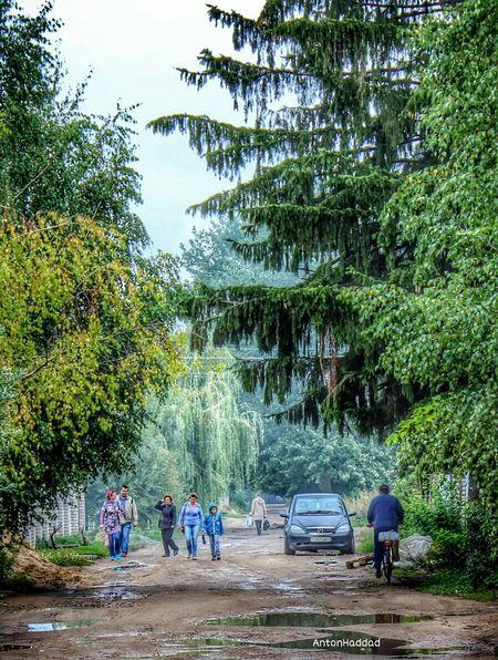 Walking under giant trees Mahilyow NEM Submissions Shootermag EyeEm Best Shots