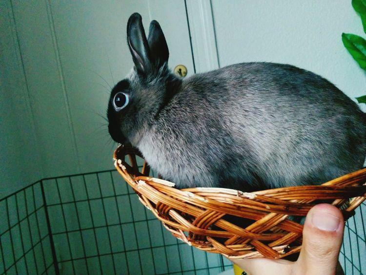 Kanin Usagi 토끼 Bunny