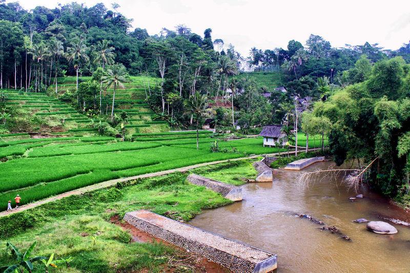 Kampung Naga Tasikmalaya. Traditional Culture Beauty In Nature Kampung Naga Landscape Nature Outdoors Tasikmalaya Traditional Village
