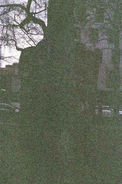 Leica M6 Tree No People Outdoors Koduckgirl Lomo F2 400 Portland, OR Voigtlander Lens Xray Damaged Film Leicacamera Street