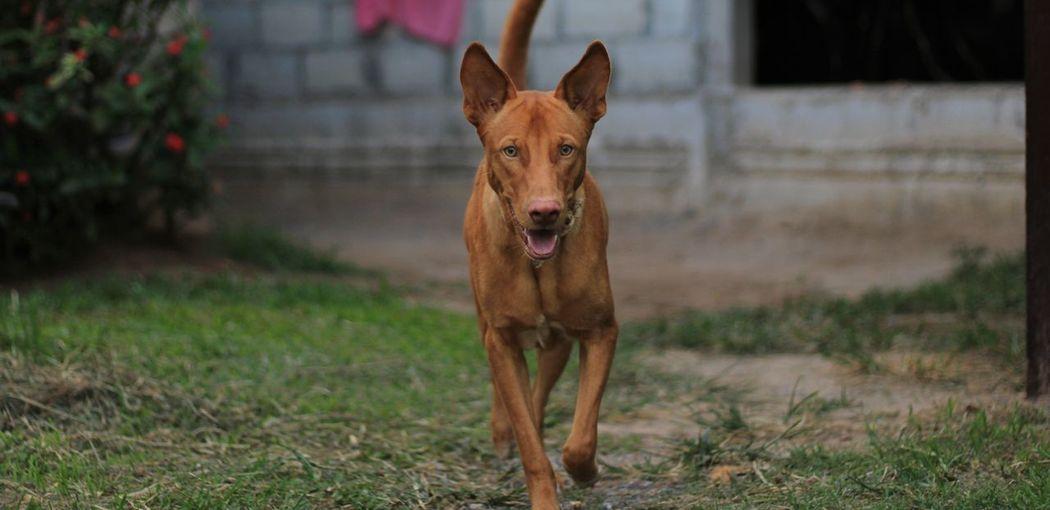 Portrait of dog standing on field