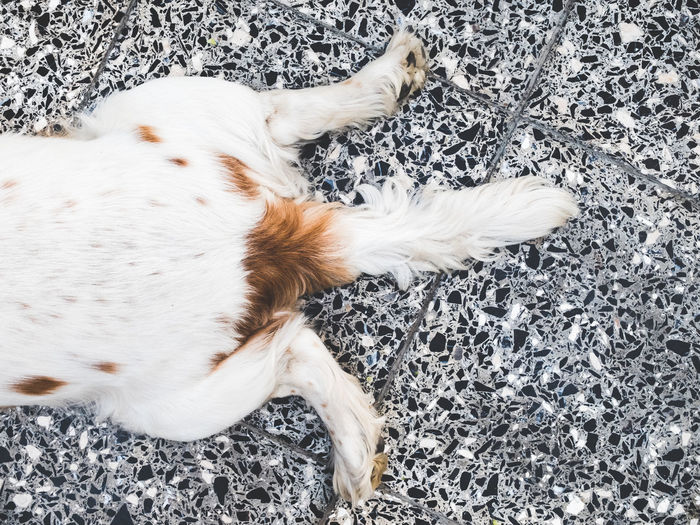 Directly above shot of dog relaxing on tiled floor